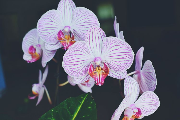 Orchids Nature