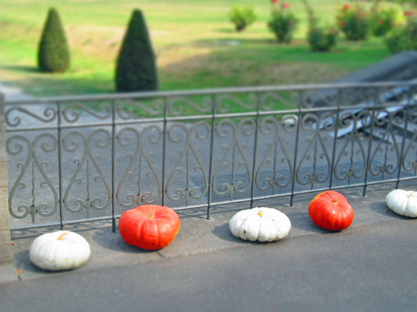 Autumn Bannister Day Fall Halloween Handrail Metal Kürbis Kürbisse No People Outdoors Park Pumpkins ın A Row