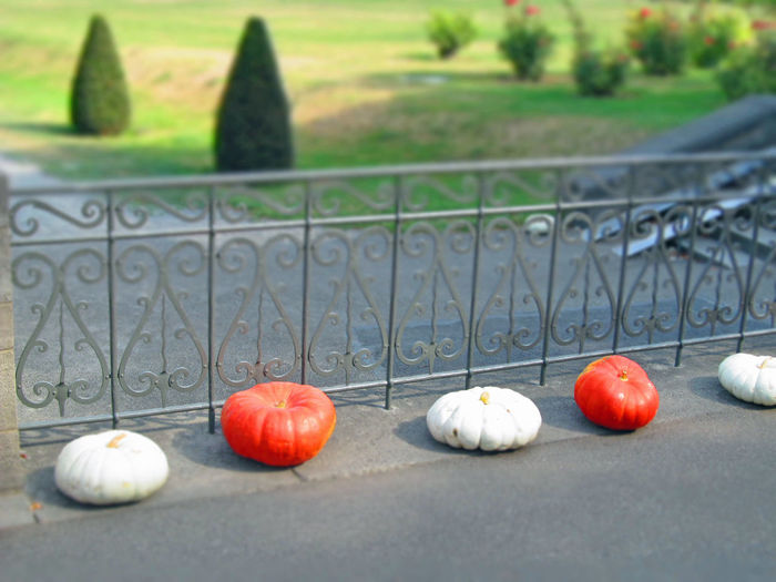 Autumn Bannister Day Fall Halloween Handrail Metal Kürbis Kürbisse No People Outdoors Park Pumpkins ın A Row
