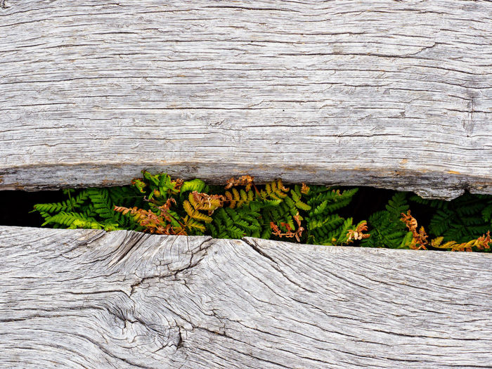 High angle view of plants growing on tree trunk
