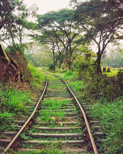 Abandoned railway track! 🚈 Abandoned Railway Track Willingdon Island Kochi Kerala GodsOwnCountry India Vintage Love Travel Goodvibes Wanderlust Beautiful Place Awesome Nostalgia Oldtimes British Winter Season  Lovely Climate Trees nature green good day memories