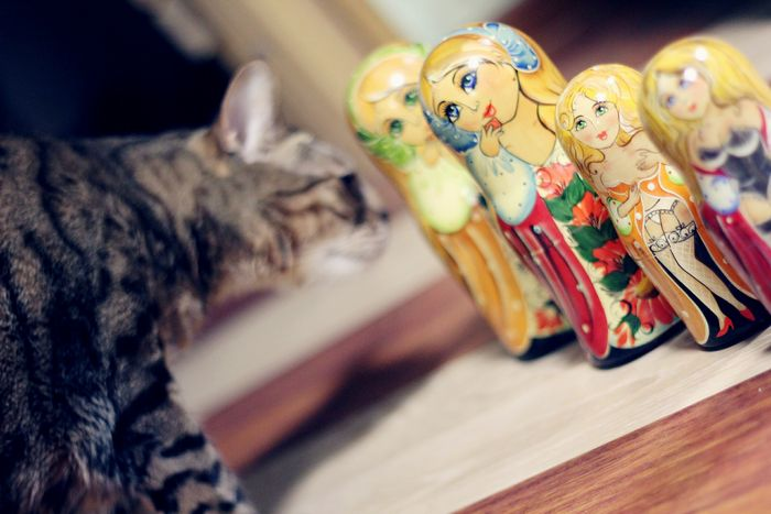 Bengal Cat Cat Doll Russian Girl Russiandoll Lifestyles Cats Cat No People Animal Themes Toy Indoors  No People Selective Focus Close-up Stuffed Toy Doll Leopard Big Cat Animal Representation Tiger Captive Animals Animal Markings Lion - Feline Lioness Undomesticated Cat