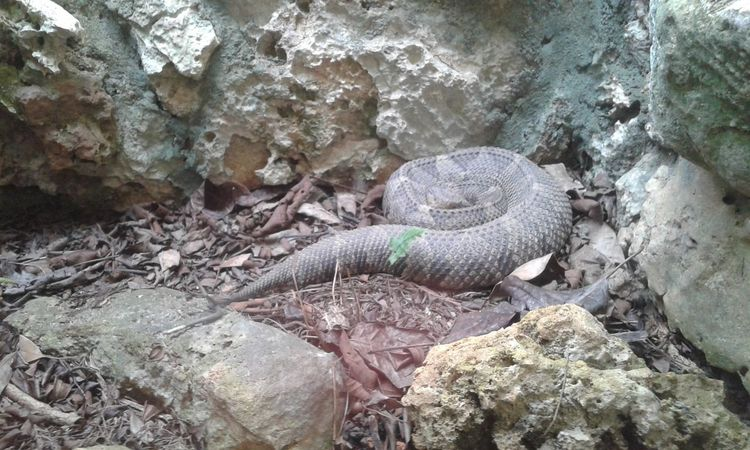 Animal Themes Reptile Animals In The Wild Day High Angle View No People Animal Wildlife Outdoors One Animal Nature Close-up