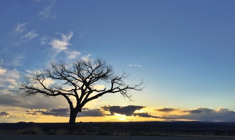 Taos Sunset Sunset Sunset_collection Tree Sunset Silhouette Silhouette_collection Desert Beauty Desert Tree Relaxing Deserts Around The World Taos Taos New Mexico Sunset Silhouettes Sunsets Sunset Drive Old Tree Tree Tree And Sky TreePorn Tree Silhouette Tree Branches Space For Copy High Desert Taking Photos Fine Art Photography Head In The Sky
