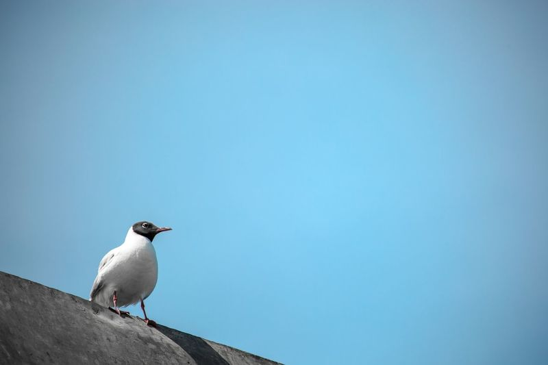 Low Angle View Of Bird Perched Against Clear Sky