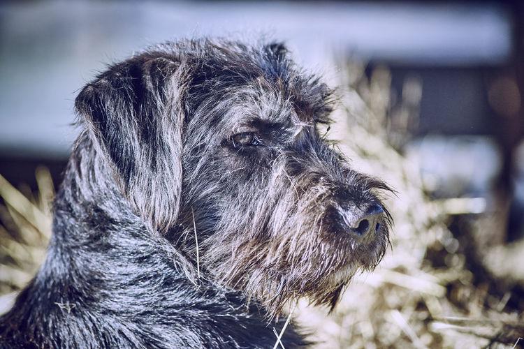 Adventure Animal Animal Photography Animal Portrait Dog Dog Portrait Hikingadventures Outdoors Pets Winter