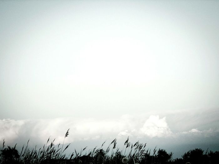 Beautiful Places Grassland Monochrome Black & White Freedom