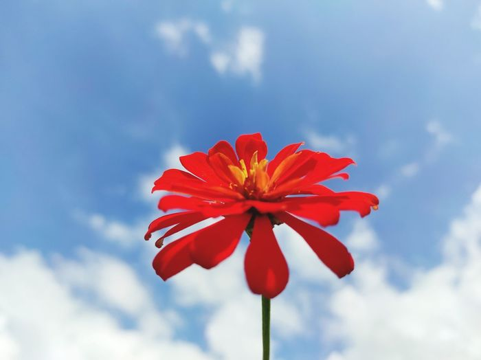 Low angle view of red flowering against sky