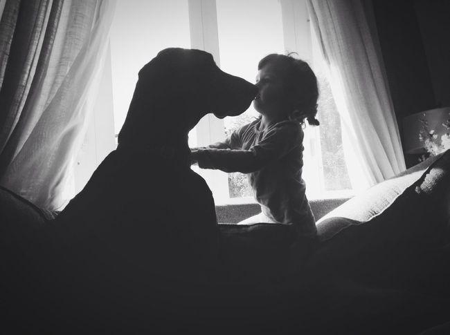 Taking Photos Dog Great Dane Blackandwhite Black & White Love Silhouette People Pets Dogs