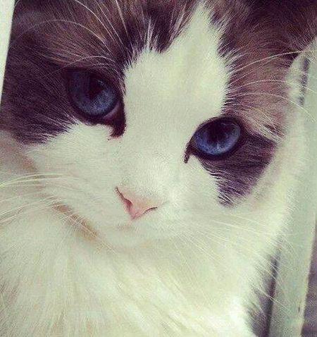Cat I Love Cat