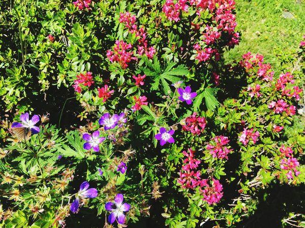 Flower Vegetation Outdoors Nature No People
