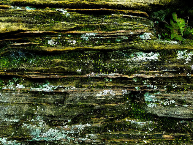 Rocks Growth State Forest State Park  Rock Formation Nature Photography Forest Photography Forest Minnesota Green Color GreenOutdoors Day No People Nature Rock Cave Texture Background Rough Stone Moss Plant Spider Web The Great Outdoors - 2018 EyeEm Awards