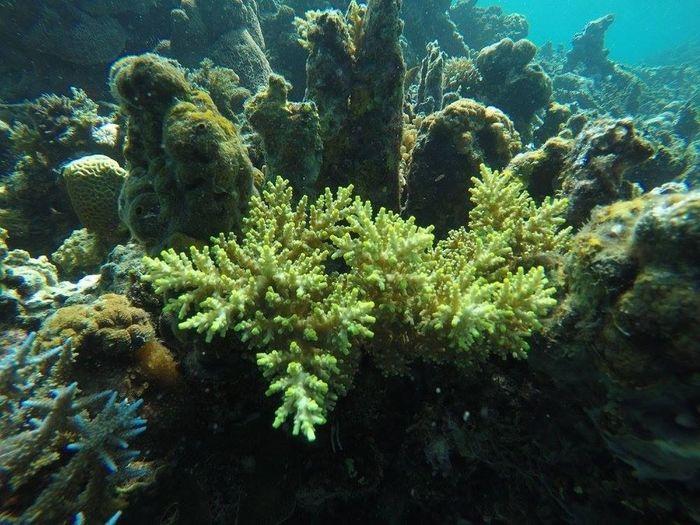 beauty from the deep Gopro Eyeem Philippines Philippines Hello World 🌞🌞🌞🌞😎😎😎😎🗾🗾🗾🗾🏊🏊🏊🏊🏄🏄🏄🏄☀☀☀☀