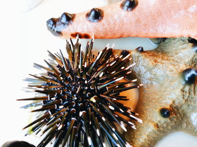 Seaurchin Starfish  Seacreatures Sea_collection EyeEm Gallery Eyeemphotography EyeEm Randomshot