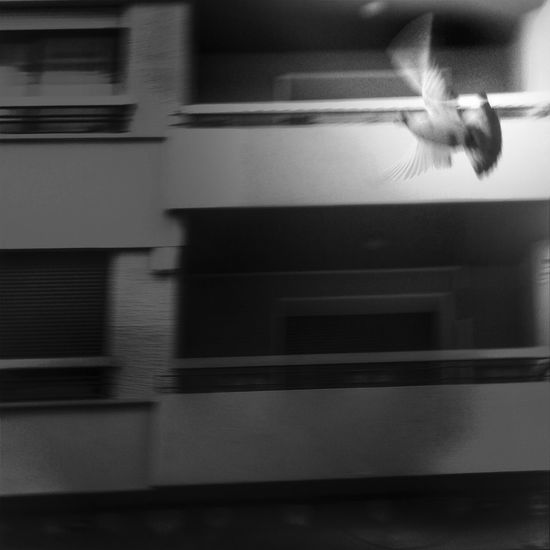 Flying Streetphotography Blackandwhite Shootermag