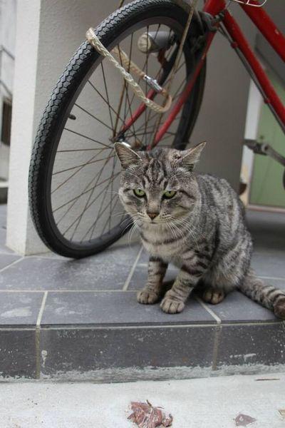 桜坂 Sakurazaka Snap オキナワ Cheese! Japan 日本 スナップ Okinawa 沖縄 Cute 可愛い ねこ Cat 猫 目つきやばい