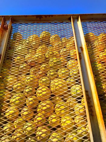 Grapefruit Rusty Colors Metal Mesh Truck Day Sunlight Outdoors No People Transport Yellowandblue