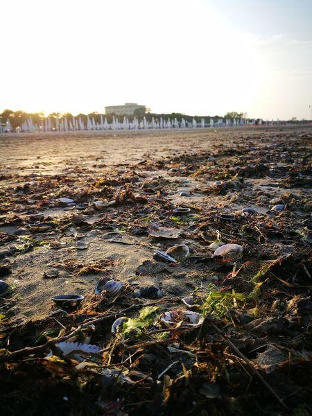 Beach Tramonto;sole;cielo Sea And Sky Prato Giardino Spiaggia Mare Conchiglie Alghe Ombrelloni Chiusi Sky Calm