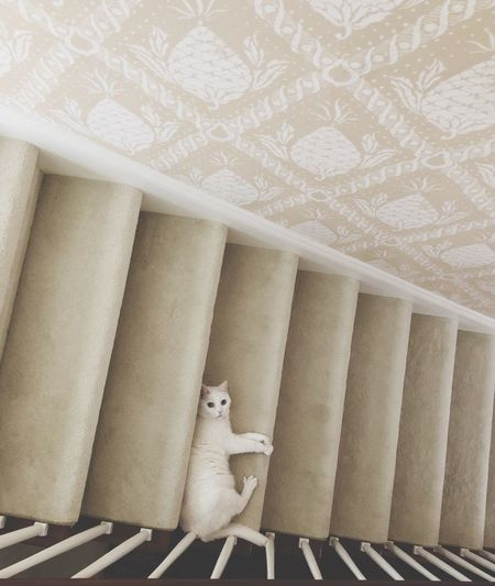 The Week on EyeEm White Cat Cat No People Indoors  Pattern Softness Steps And Staircases White Color Animal Animal Themes Day