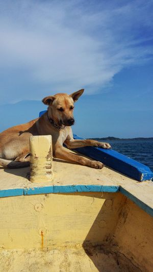 Cambodia Blue Boat One Animal Dog Canine Mammal Animal Themes Animal Domestic Animals Pets Domestic Sea Vertebrate Water Sky Nature Sunlight No People Horizon Over Water