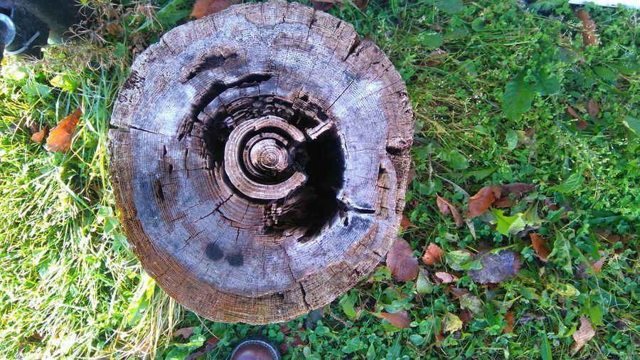 Old stump!