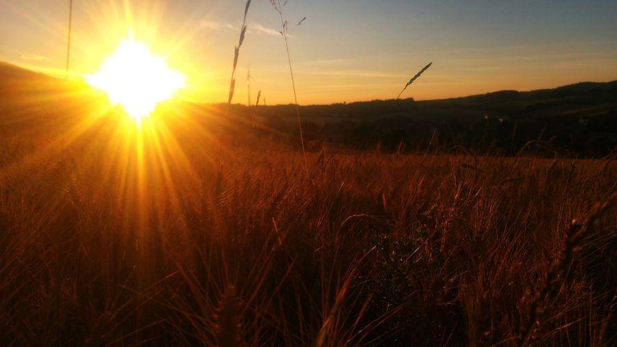 Colour Of Life Summer Sun Freden Sonne