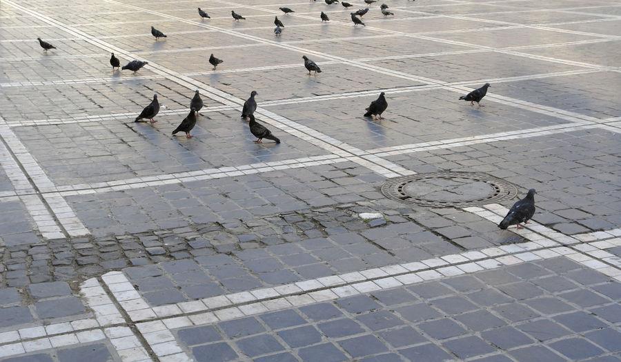 High angle view of pigeons on sidewalk
