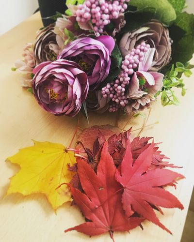 Autumn Leaves 🍁 Autumn colors Flowering Plant Flower Plant Beauty In Nature Freshness Close-up Vulnerability  Fragility Leaf Nature Still Life Flower Head