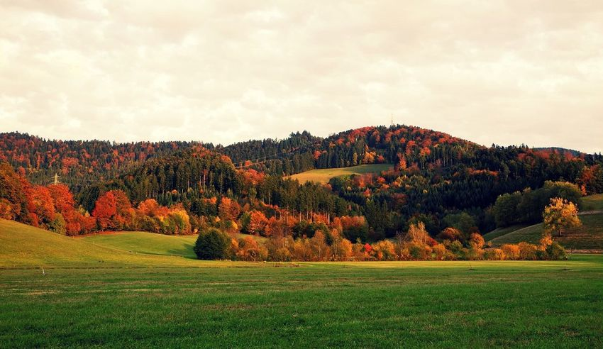 Autumn Beauty In Nature Day Grass Landscape Mountain Multi Colored Nature No People Outdoors Scenics Sky Tree Trees Nature_collection Rural Landscape_Collection Colorful Leaves In Autumn Colorful Leaves Colorful Trees Autumn Colours Autumn Collection Forest Growth Landscape_photography The Great Outdoors - 2017 EyeEm Awards The Week On EyeEm