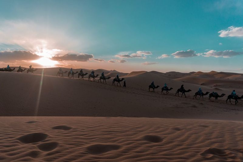 Desert Moments Of Happiness EyeEmNewHere Sand Sky Land Animal Animal Themes Mammal It's About The Journey Cloud - Sky Scenics - Nature Travel Sunlight Camel Sun Nature Desert Group Of Animals Environment Landscape Sunset Animal Wildlife