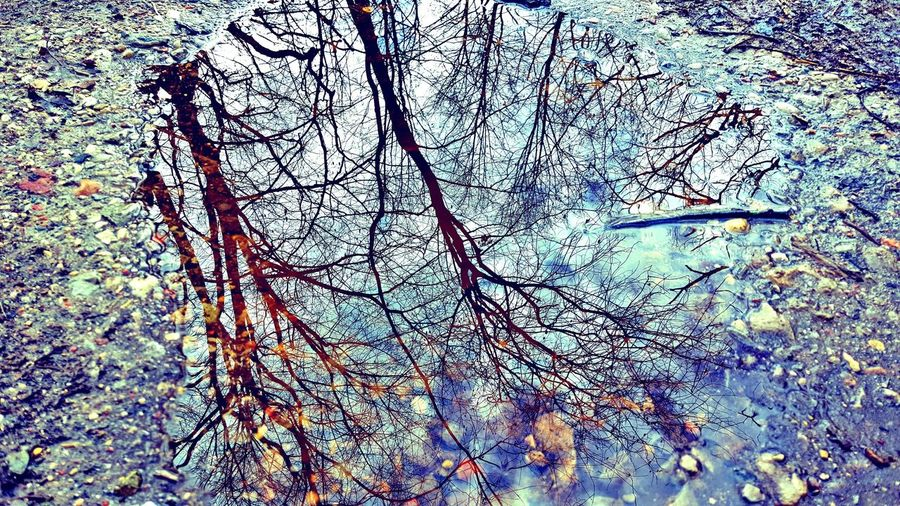 Tree Backgrounds Spring Focus On Foreground Mirroring In Water Mirrored Reflection Mirrorreflection Mirrorreflextion Skyonground Wateronground Water Reflections Waterreflections  Water