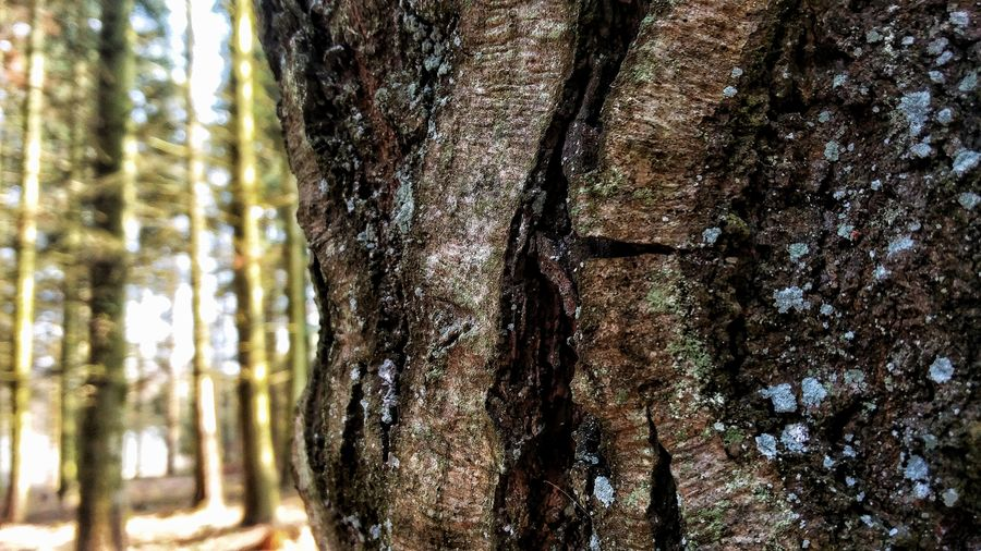 Tree Tree Trunk Day Forest Nature Growth No People Beauty In Nature Outdoors Branch Close-up