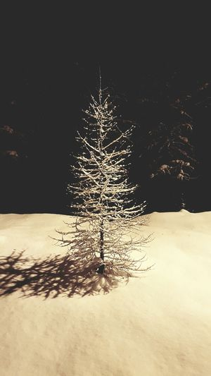 Illuminated Black Background Impact Night Outdoors Pine Tree Lone Tree Lone Tree Silhouette Snowkissed Snow Kissed Snowy Branches Snowy Trees Snowy Tree Snow Covered Snow White White Tree White Collection Copy Space Kimberleybc Kimberley, B.C Kimberley Kootenays British Columbia Canada