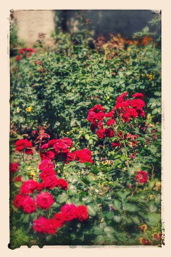 Flowers Eyem