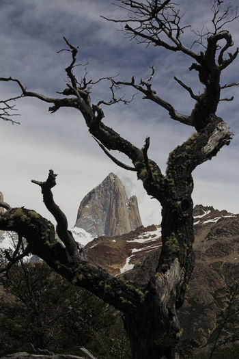 Fitz Roy Trekking Tree Plant Sky Beauty In Nature Scenics - Nature Mountain Branch Nature Tranquility Day Tranquil Scene No People Bare Tree Cloud - Sky Non-urban Scene Outdoors Environment Idyllic Landscape Mountain Range Dead Plant