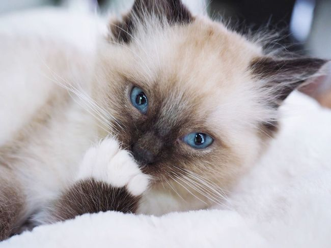Check This Out Hello World Ragdoll Kitten 11 Weeks Sky Animal Pets The Netherlands Taking Photos Relaxing Enjoying Life Olympus Utrecht Utrecht , Netherlands Cat Lovers Catoftheday Catsofinstagram