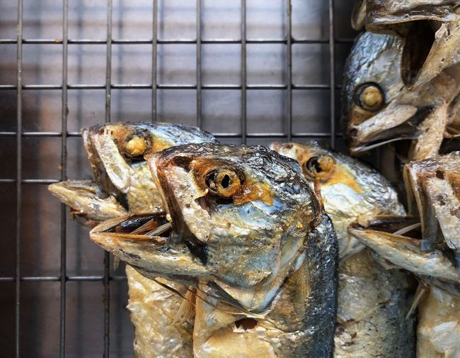 Thai street food, Fried mackarel. Must Try Easy Popular Famous Delecious Fried Mackarel Street Food Local Food Food Thai Animal Animal Themes Vertebrate Close-up One Animal No People Day Fish Focus On Foreground Nature