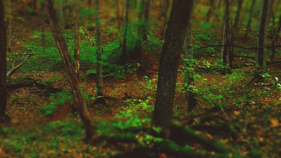 Forest Tree Nature Selective Focus WoodLand Non-urban Scene Woods Outdoors Beauty In Nature