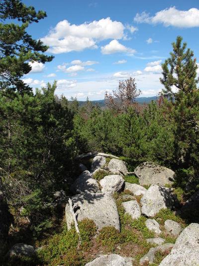 Mugo Pine Cloud - Sky Creeping Pine Environment Moraine Nature No People Non-urban Scene Outdoors Rock Rock - Object Scenics - Nature Sky