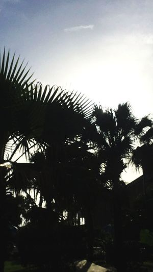 Beach Water Nature Sun Sky Sunrise Day Sunlight Tree Palm Tree Growth Silhouette Low Angle View Nature Beauty In Nature No People Outdoors