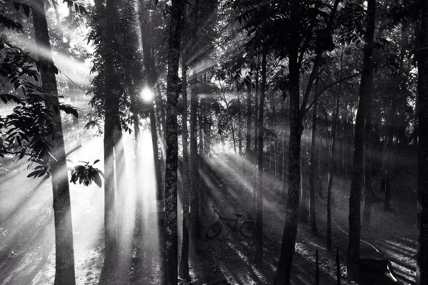 Monochrome Photography Landscape_photography Forest Tree Tranquil Scene Sunlight Nature
