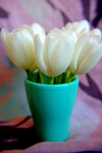 Soft Tulips Beauty In Nature Close-up Flora Flower Flower Head Flower Pot Flowering Plant Focus On Foreground Fragility Freshness Green Color Growth Inflorescence Nature No People Outdoors Petal Plant Potted Plant Tulip Vulnerability