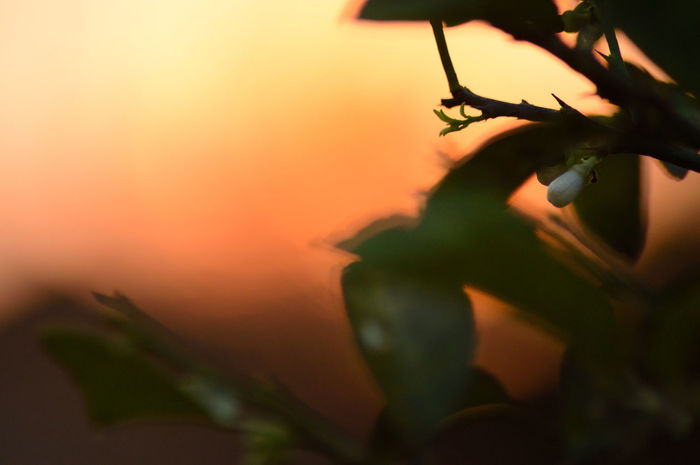 Light And Shadow Light Urban Gardening Creative Light And Shadow Getting Inspired Flower Flowers Sunset Silhouette Sunset Silhouettes Sunset_collection Beauty Redefined