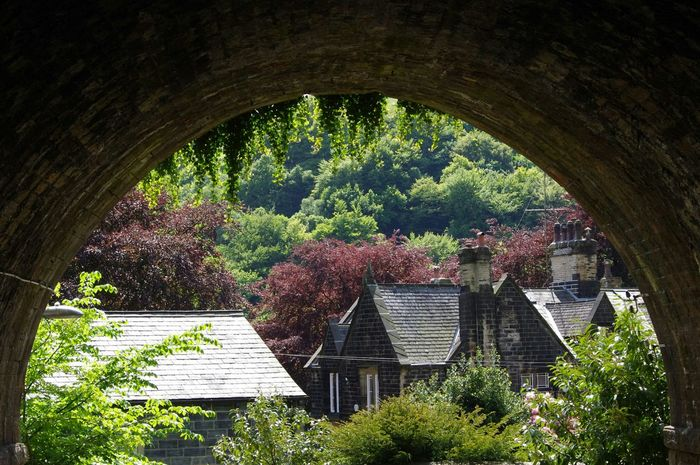 One Of My Favorites Under A Bridge in Todmorden Greater Manchester Ivy Ivy Leaves Different Shades of Green Pink Houses Chimneys and Trees Roof Tiles EyeEm Best Shots Exceptional Photographs Pentax Walking Around Countryside Home Sunny Day Tadaa Community Hidden Gems  Colour Of Life