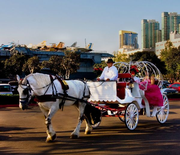 Straight from the camera horse and carruage a wedding to be sure ship and sky line of san diego ca in the background Horse Outdoors People Domestic Animals Day Adult Sky Straight From The Camera Practice Fun Shooting Practicing Photography Just Shooting Around!! Straight From The Camera Transportation Wedding Photography Wedding Day Wedding Collection