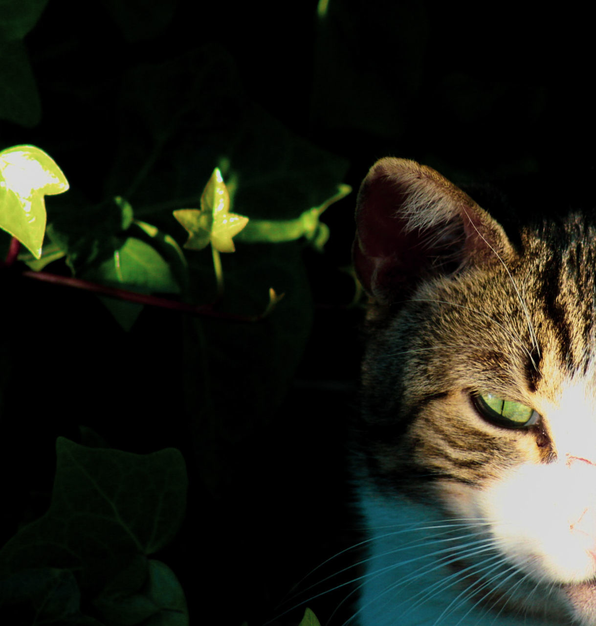 domestic cat, domestic, pets, domestic animals, cat, one animal, animal, animal themes, feline, mammal, vertebrate, close-up, no people, leaf, plant part, indoors, animal body part, whisker, looking, nature, animal head, animal eye
