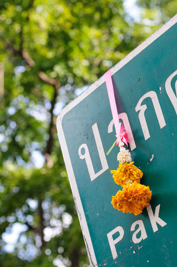 Low angle view of marigold hanging on information sign against tree