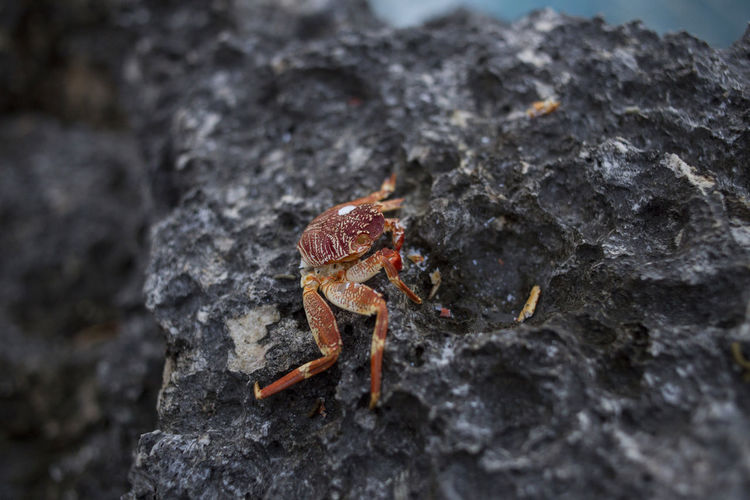 Animal Themes Animal Wildlife Animals In The Wild Close-up Crustacean Day Hermit Crab Nature No People One Animal Outdoors Rock - Object Textured