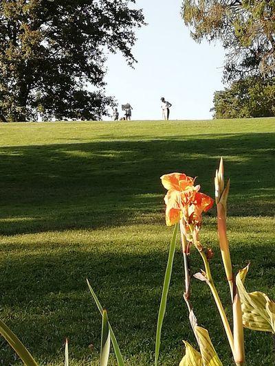 Tarde Golf