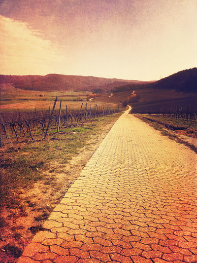 Surreal vineyards in Bavaria Castell Vineyards  Vineyard Way Forward Abstract Surrealism Surreal Way Path Motivation Sky Direction The Way Forward Landscape Environment Tranquility Footpath Tranquil Scene Nature No People Land Clear Sky Dirt Road Scenics - Nature Field Cobblestone Diminishing Perspective Outdoors vanishing point Long